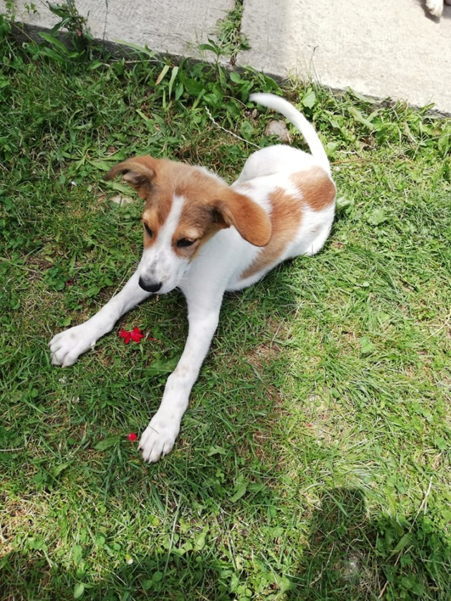 COOPER/MALE/5 MOIS /TAILLE MOYENNE A GRANDE ADULTE  Cooper19