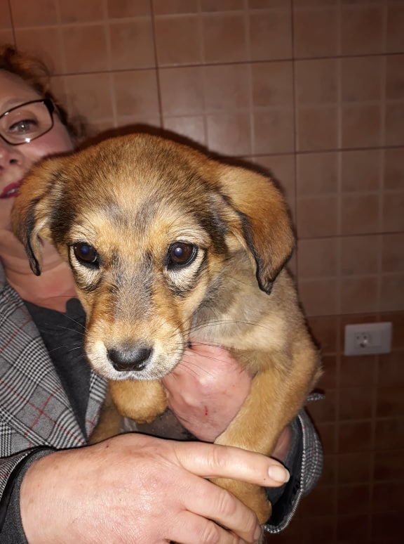 PACHA/MALE/3 MOIS/TAILLE MOYENNE ADULTE  Pacha210
