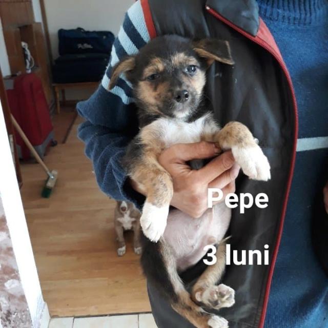 PEPE /MALE/ NE EN JUIN 2018  Pepe_310