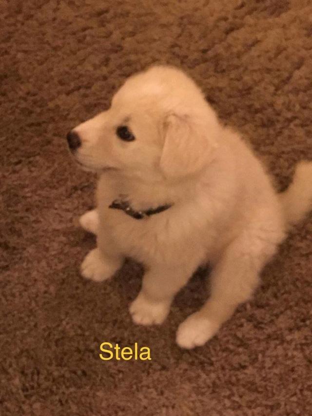 ESSIA EX STELA/FEMELLE/NÉE VERS AOUT 2018 /TAILLE MOYENNE ADULTE /En famille d'accueil en vu d'adoption /stand by Stela311