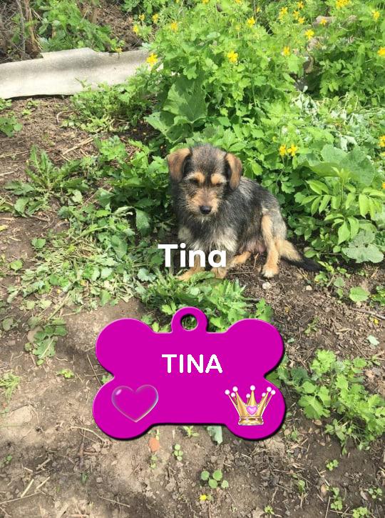 TINA /FEMELLE/AGE A VENIR /TAILLE PETITE  au refuge Tina11