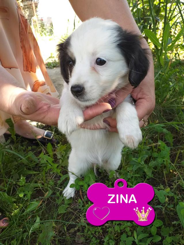 ZINA/FEMELLE/3 MOIS/TAILLE PETITE ADULTE  chez la maman du véto Zina11