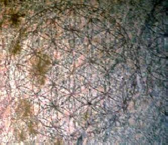Le Secret de la FLEUR de VIE Abydos11