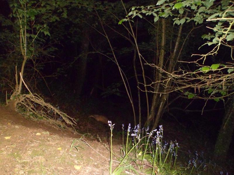 Le visage de Badger's Land - Page 2 Sam_0110