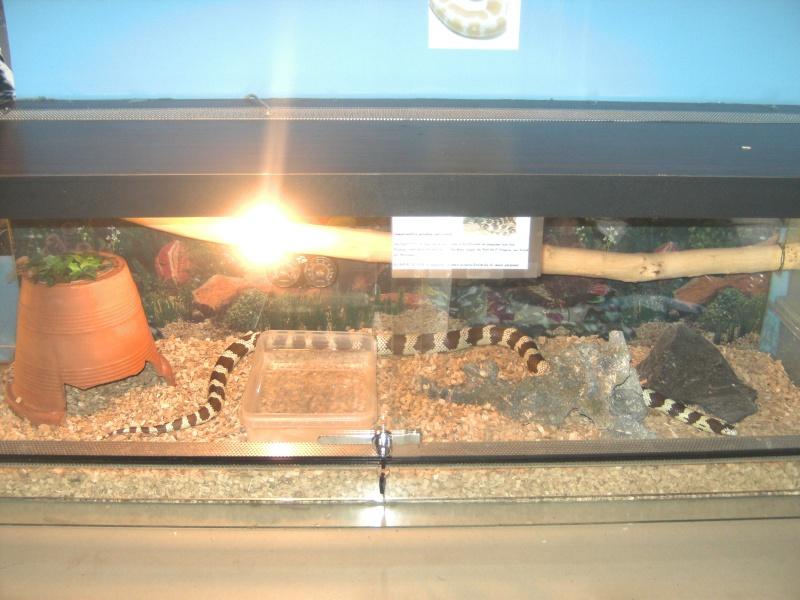 ceratophrys cranwelli Bild0310