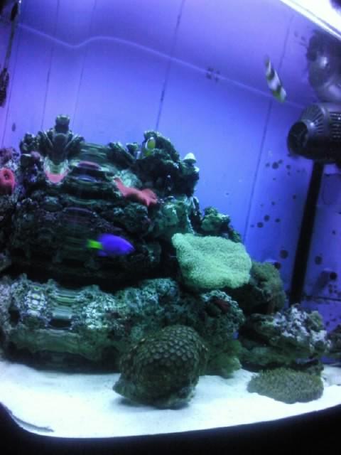 Interpet River Reef 94 Photo410