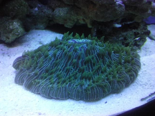 Interpet River Reef 94 Photo415