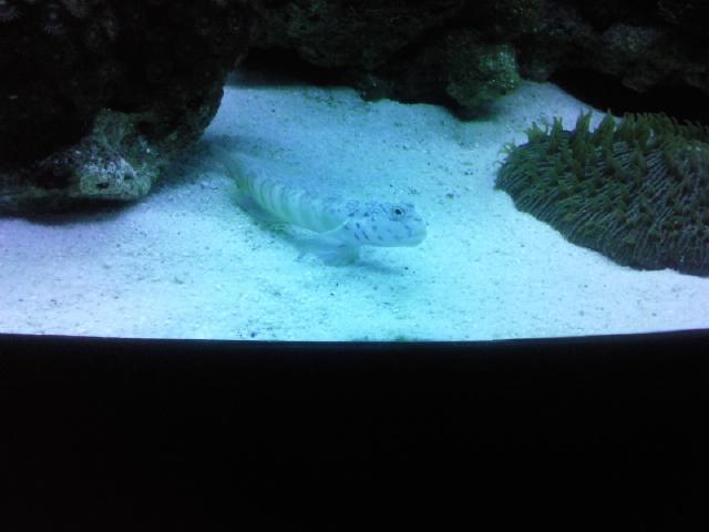 Interpet River Reef 94 Photo416