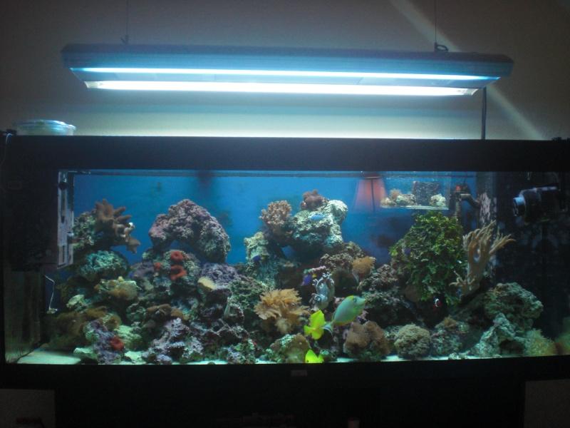 Jewel 400l Reef Cimg2818