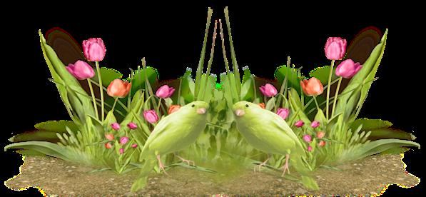 LES FAUSSES IDEES EN MATIERE D'ALIMENTATION- Oiseau10