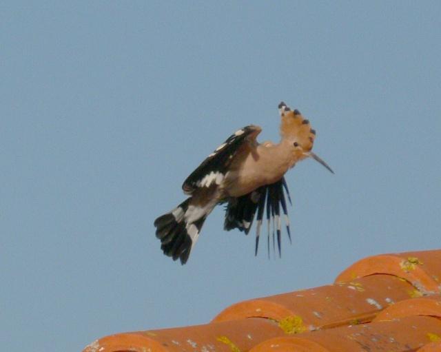 Une avalanche ... D'oiseaux ! ils se sont donnés le mot . 09040911