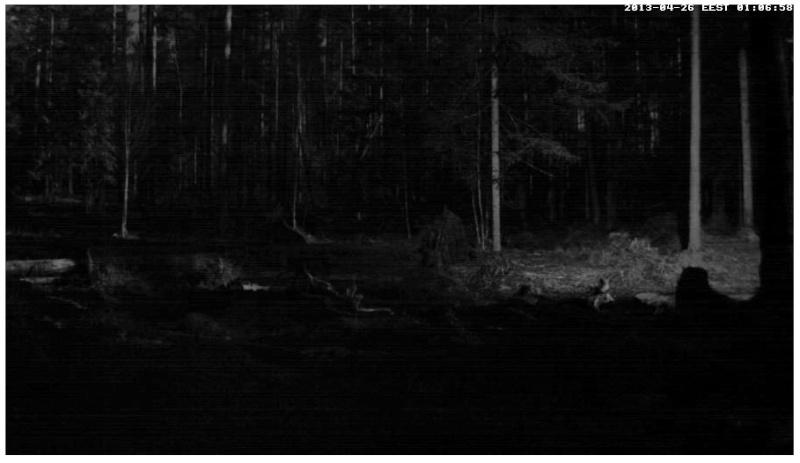 Alataguse Bear Cam 2013 - Page 2 2013-014