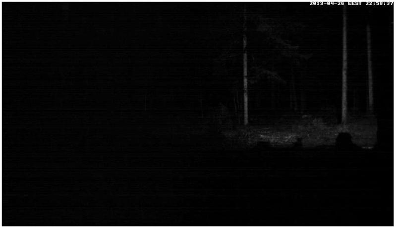 Alataguse Bear Cam 2013 - Page 2 2013-015