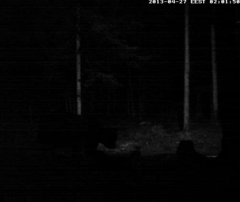 Alataguse Bear Cam 2013 - Page 2 2013-017