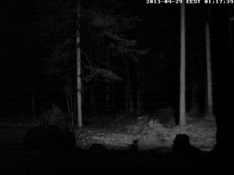 Alataguse Bear Cam 2013 - Page 2 2013-020