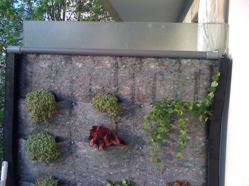 Mur végétal extérieur  8poche10