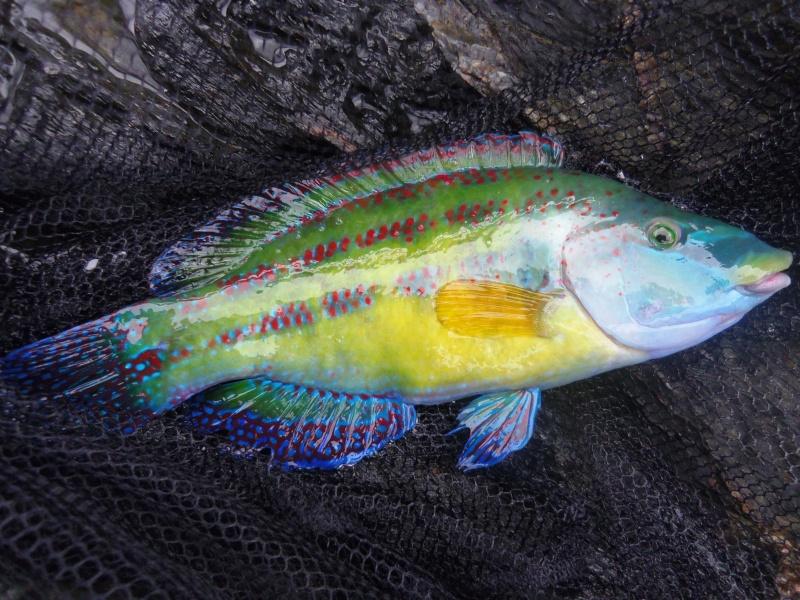 poisson tropical? Photo_10