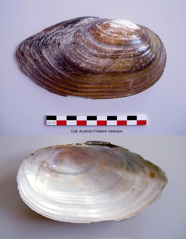 Le Musée de Sarrebourg... Margar11