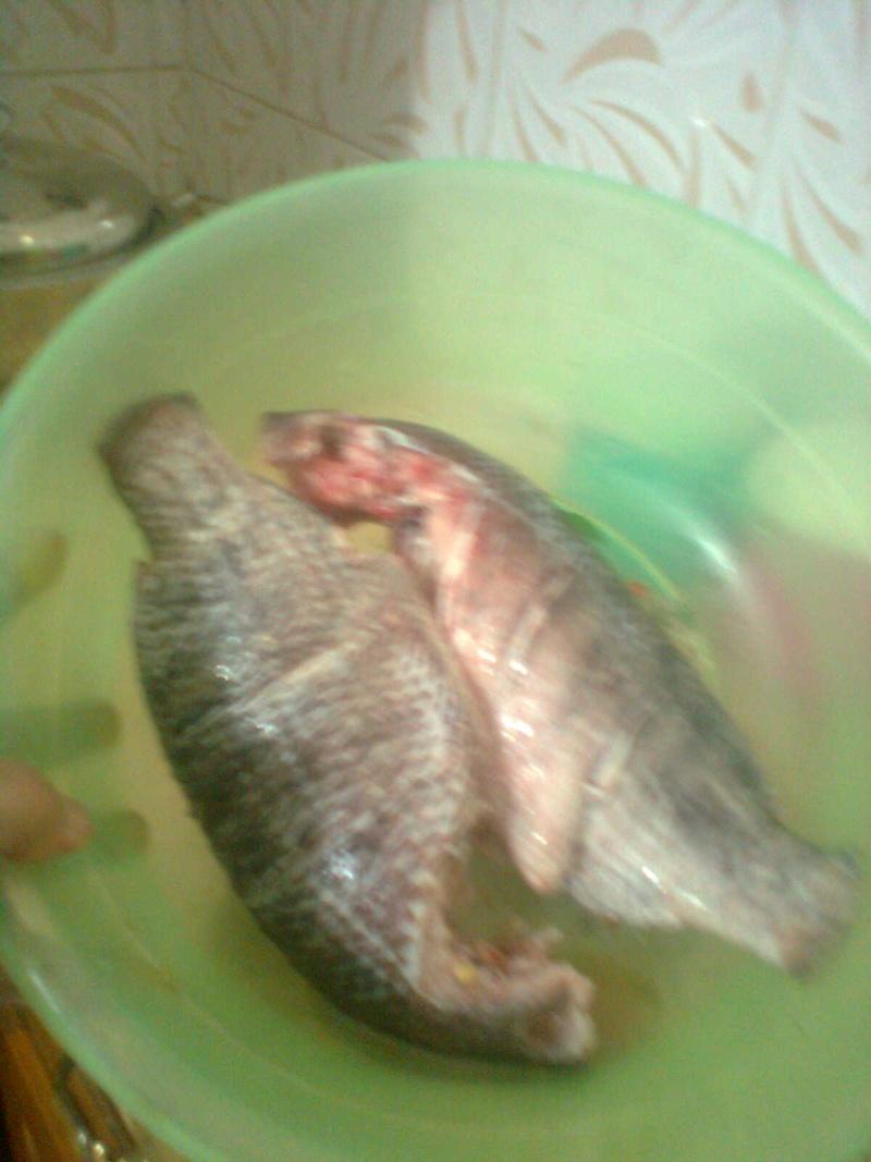 mes poissons Ouuoo_12