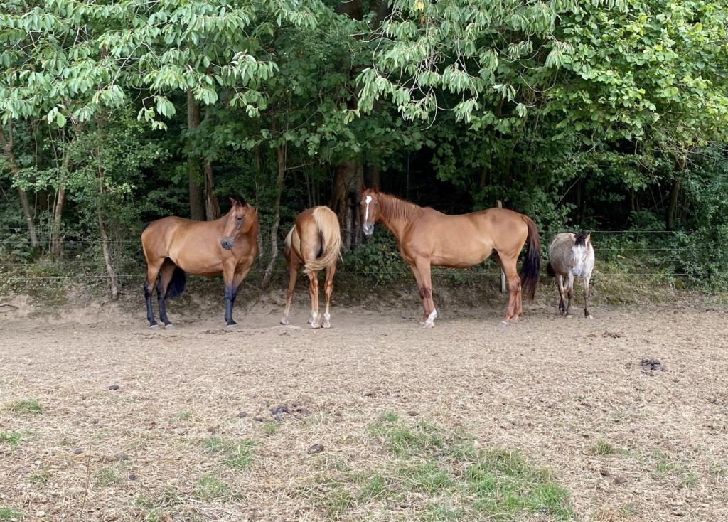 INDIANA - OI type poney née en 1994 - adoptée en juillet 2016 par Adeline - Page 2 Img_5710