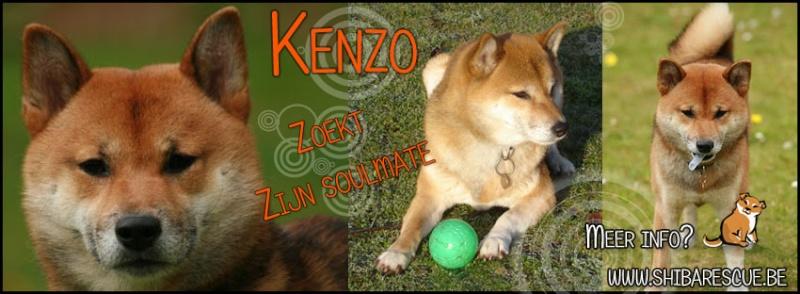 Kenzo cherche une nouvelle famille 97006210