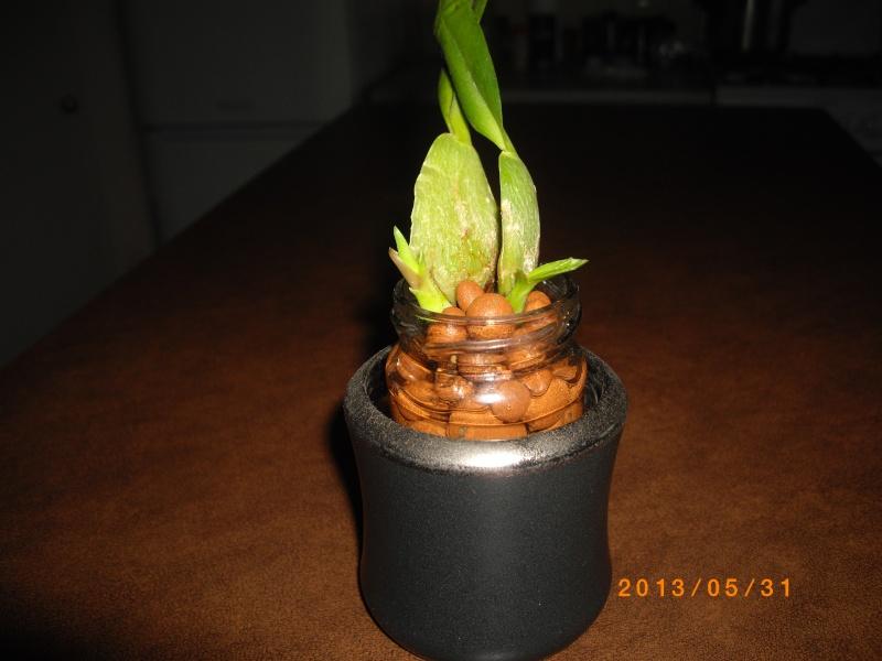 Mes orchidées... par Stape73 - Page 4 Imgp6316
