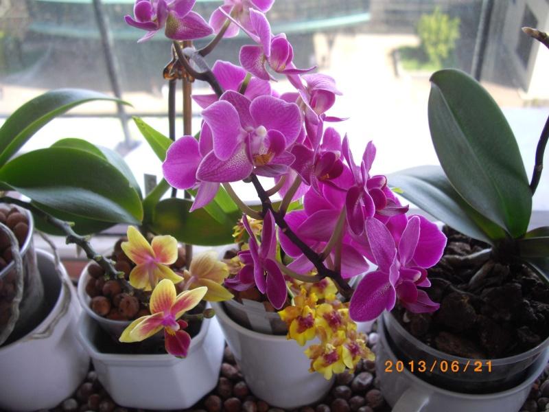 Mes orchidées... par Stape73 - Page 4 Imgp6412