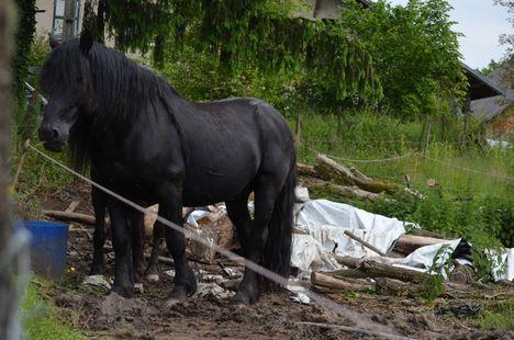recherche d'un camion 4places ou plus pour sauvetage de chevaux !!  Dsc_0019