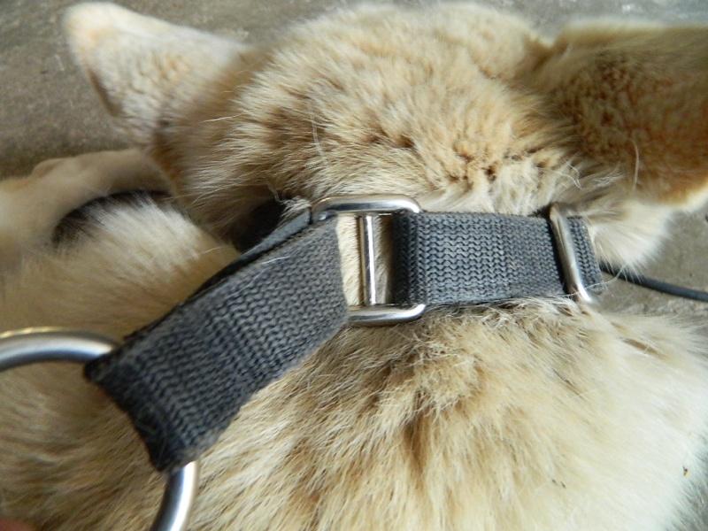 Mon husky sibérien m'inquiète... Dscn9012