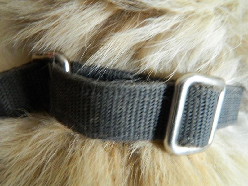 Mon husky sibérien m'inquiète... Dscn9013