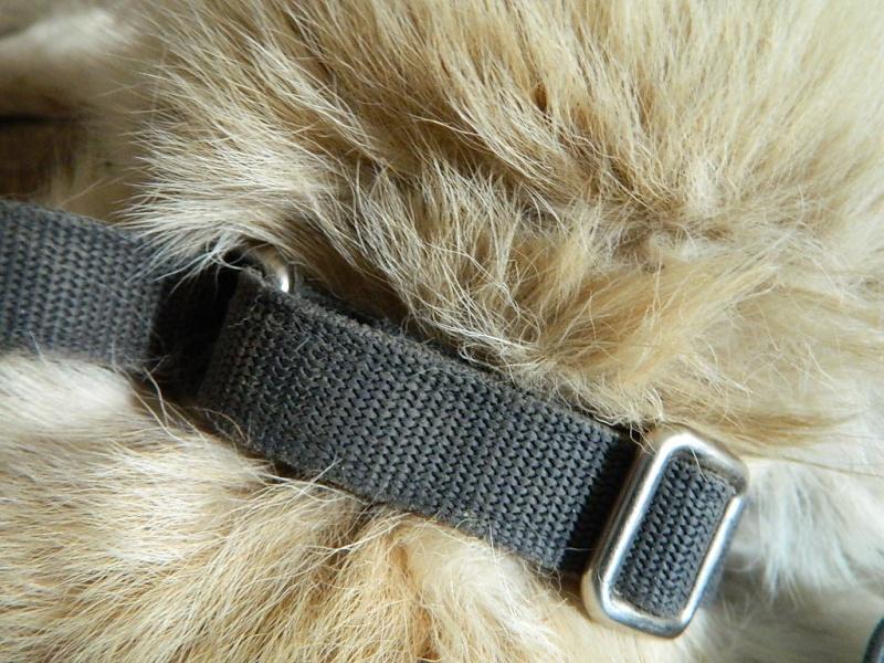 Mon husky sibérien m'inquiète... Dscn9014
