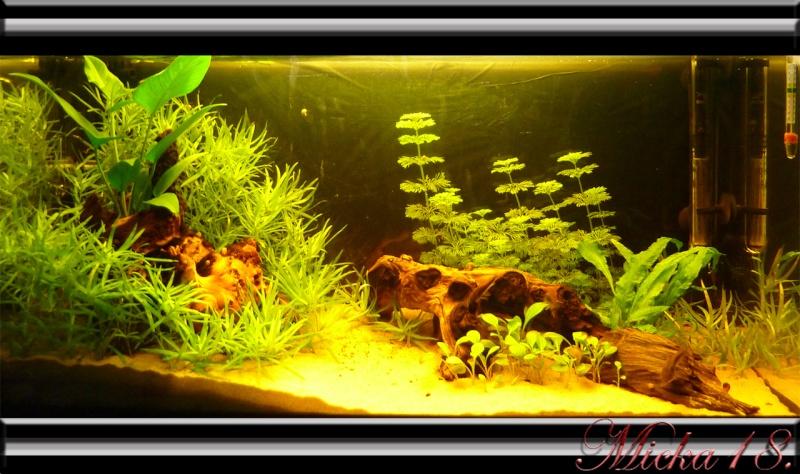 100 litres planté Le_5_j10