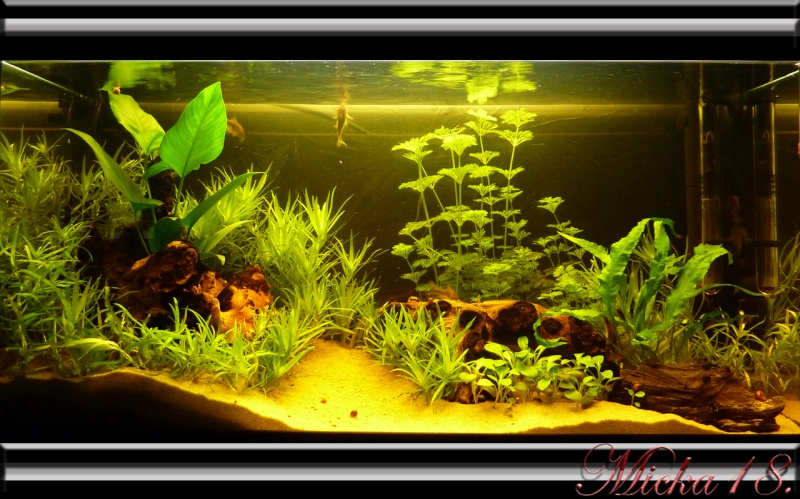 100 litres planté P1120911
