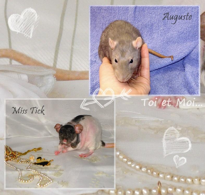 Les touronds de KTY Miss Tick et de IND Auguste (dépt 30-07) Montaa10