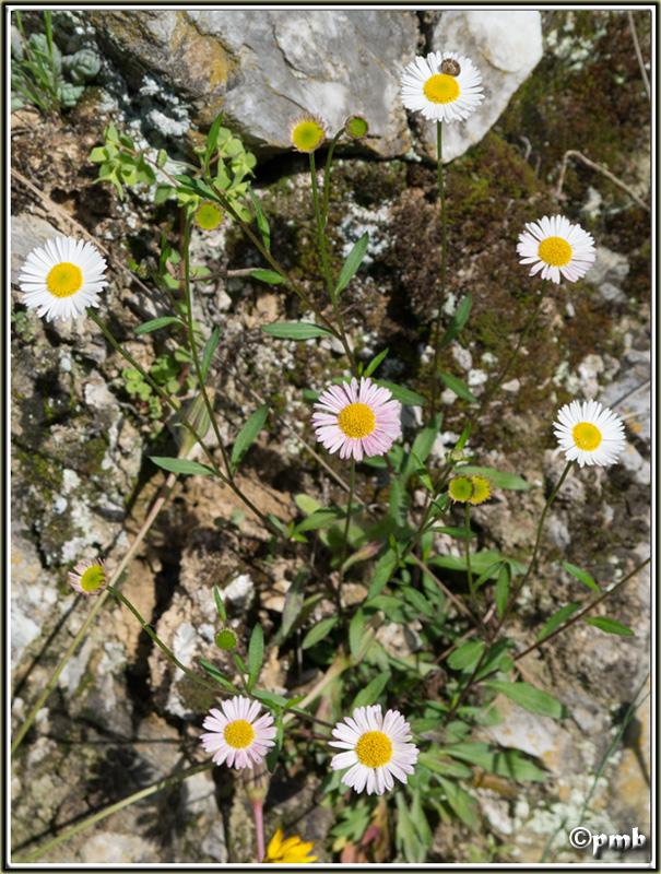 2 jours dans les Alpes ligures : Orchidées, Flore, tourisme Buggio10