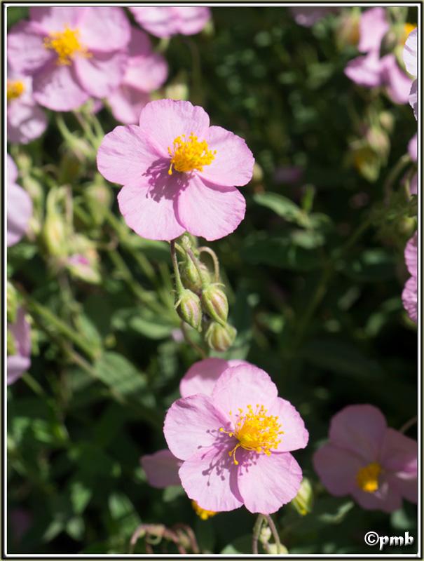 2 jours dans les Alpes ligures : Orchidées, Flore, tourisme Buggio12