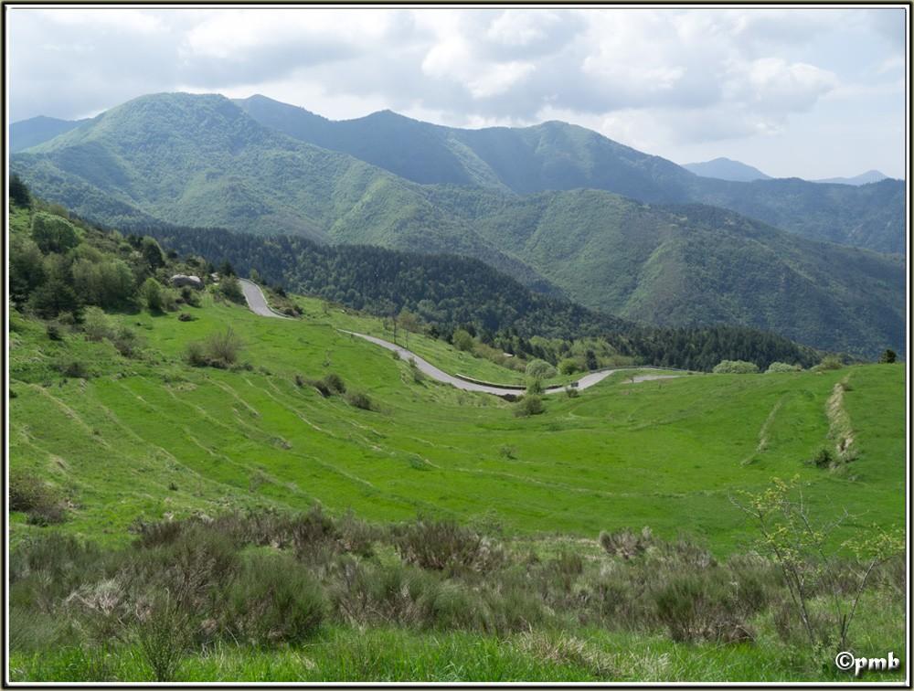 2 jours dans les Alpes ligures : Orchidées, Flore, tourisme Col-de11