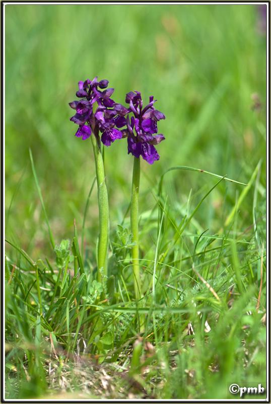 2 jours dans les Alpes ligures : Orchidées, Flore, tourisme Col-de14