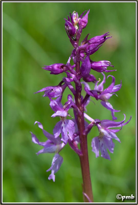 2 jours dans les Alpes ligures : Orchidées, Flore, tourisme Col-de20