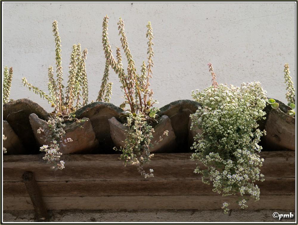 2 jours dans les Alpes ligures : Orchidées, Flore, tourisme Dolcea10