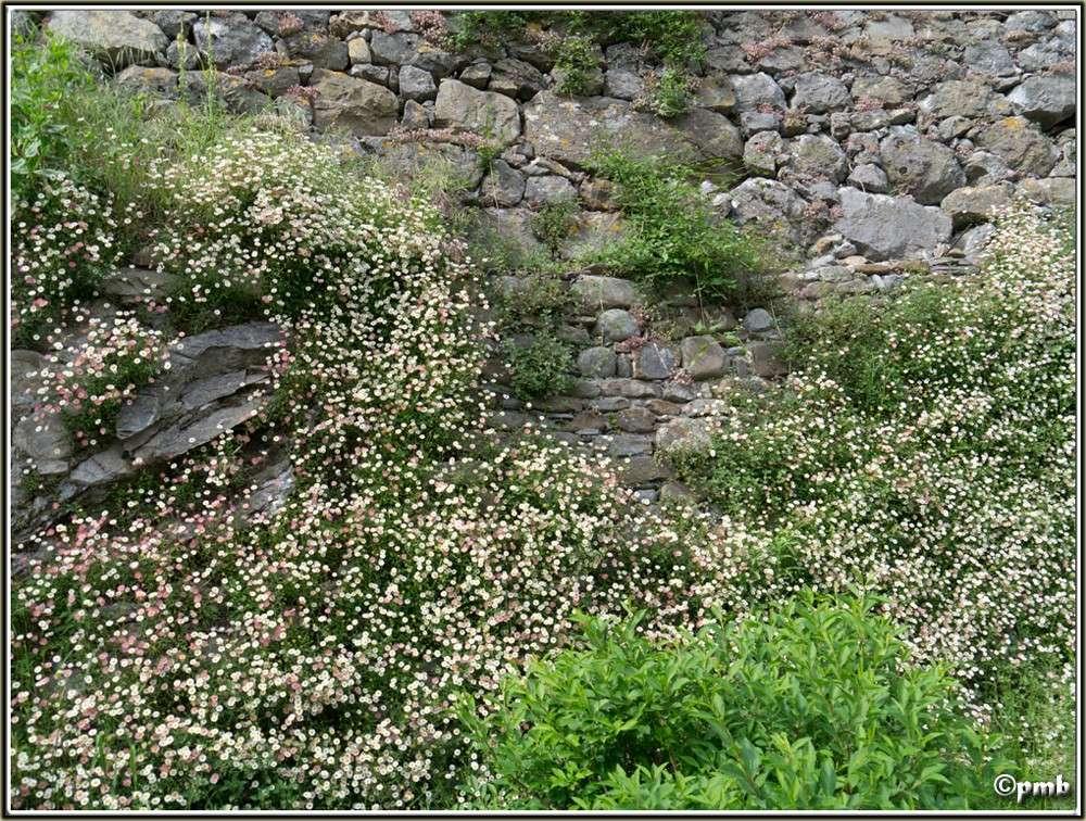 2 jours dans les Alpes ligures : Orchidées, Flore, tourisme Pigna-10
