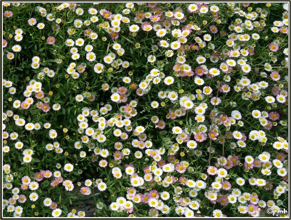2 jours dans les Alpes ligures : Orchidées, Flore, tourisme Pigna-11