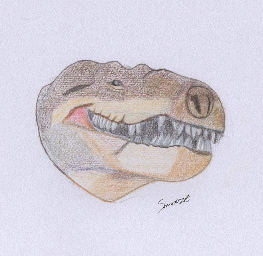 Mon petit carnet de croquis Dino_c10
