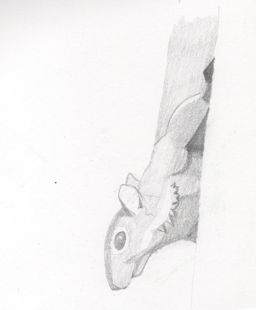 Mon petit carnet de croquis Ecureu10