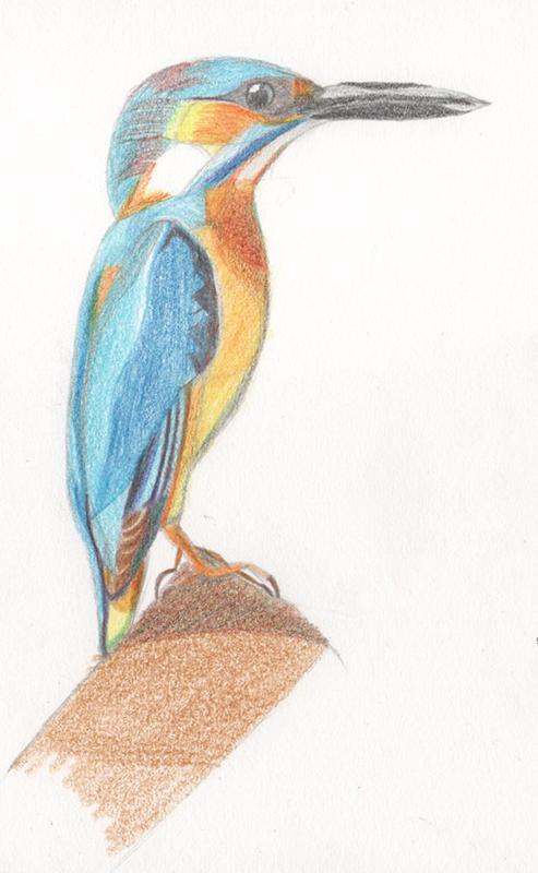 Mon petit carnet de croquis Oiseau10
