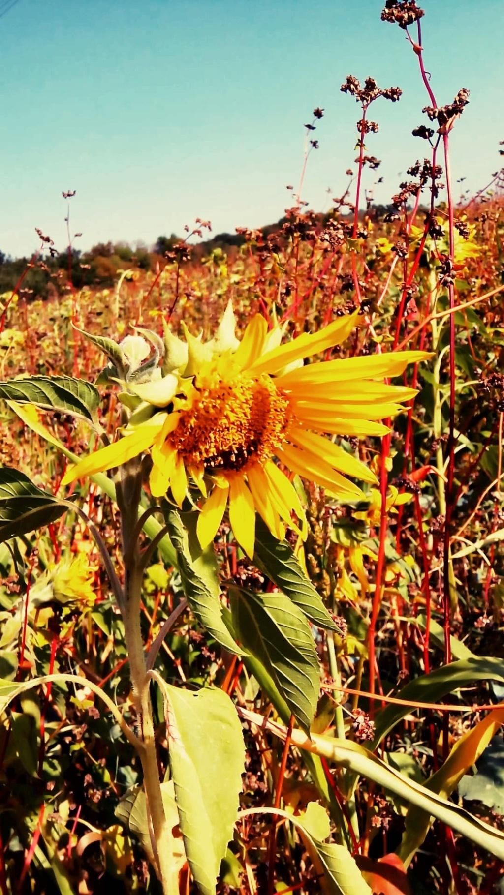 Fleurs de saison - Page 17 42785610