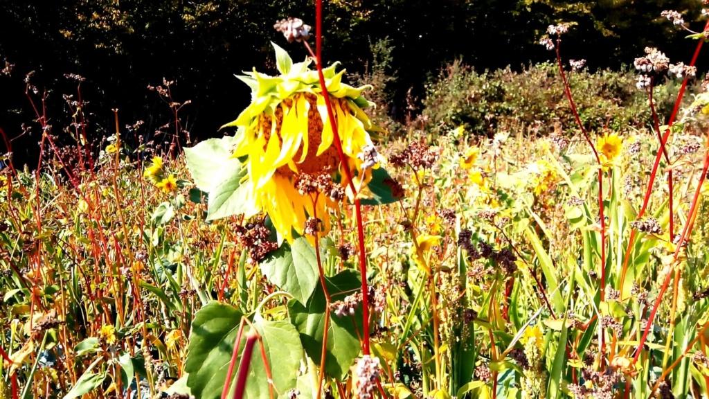 Fleurs de saison - Page 17 42886910