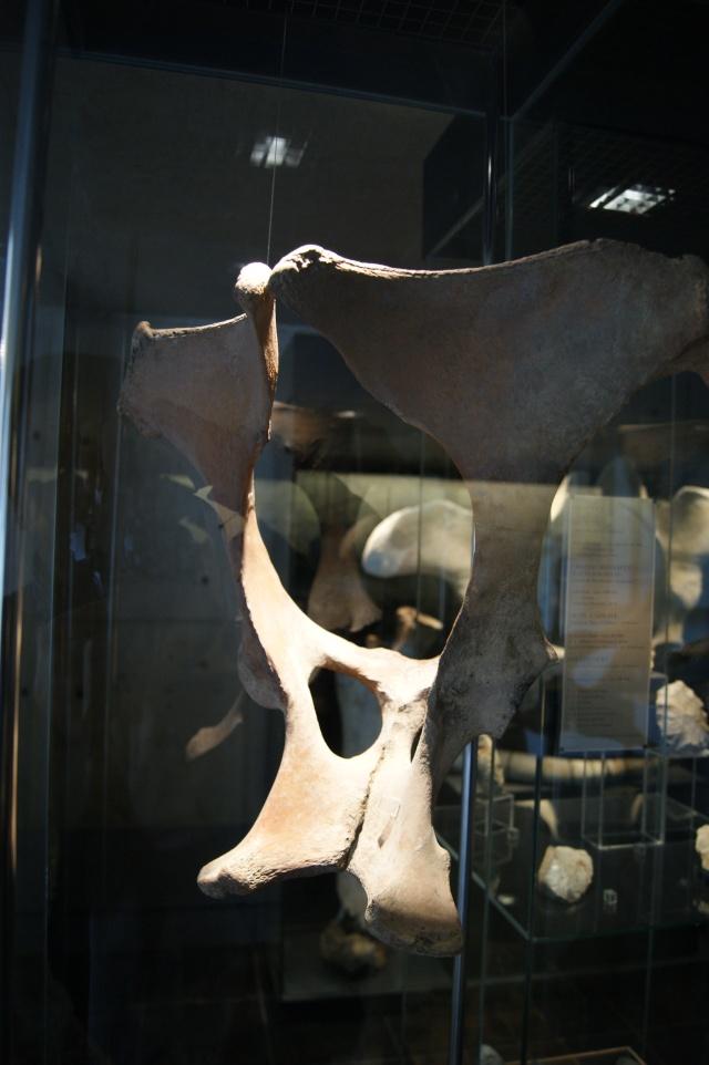 Le Musée de l'Ardenne à Charleville-Mézières... Dsc00415
