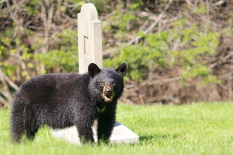 Le 35-100 qui a vu l'ours L_ours10