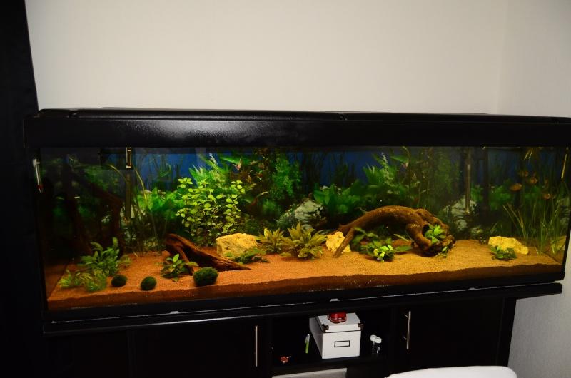 Bac de 600L Pygocentrus Nattereri (piranhas) _rvi4414